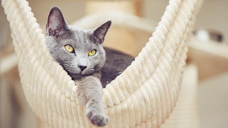 Gato Sano en Casa
