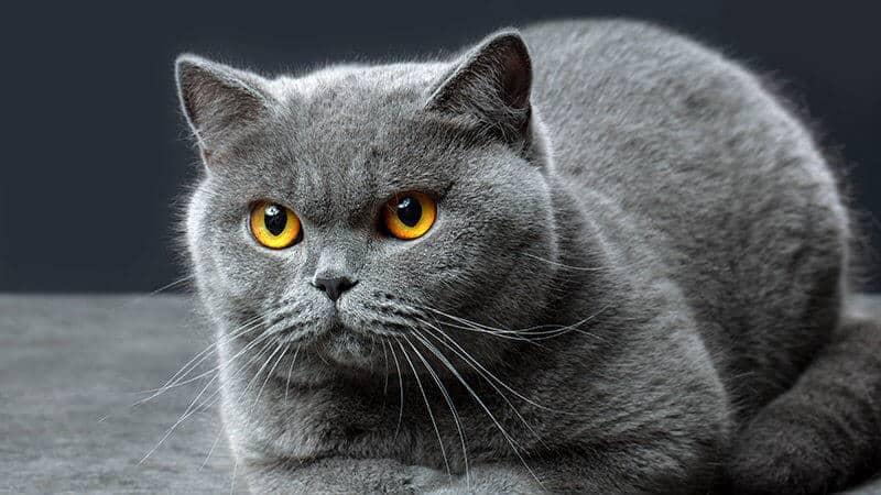 La Anticoncepcion del Gato