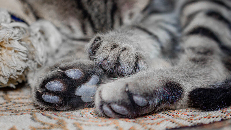 Almohadillas Gatos Negras